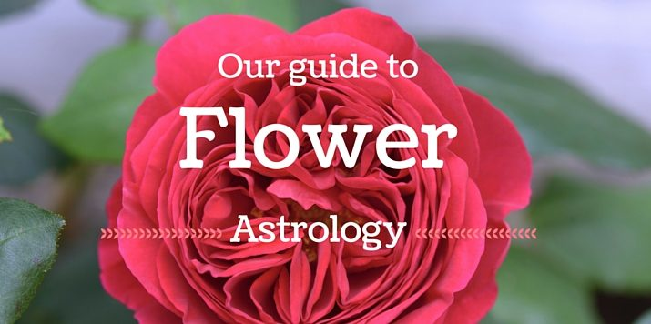 Autumnal Equinox: Have you heard about Flower Astrology?
